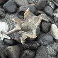 海岸に打ち上げられ、砂まみれになっていたタコをあらってあげて、海へ返してあげました。